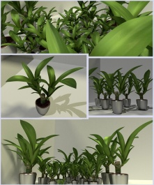 indoor plant_2_render