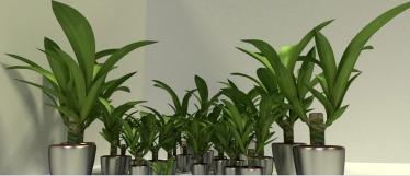 Model Download Indoor Plant_2