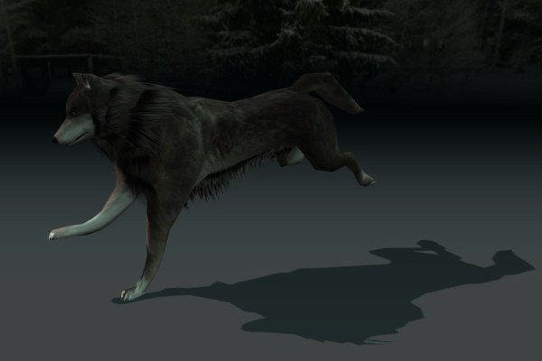 Wolf run cycle Animated on studio verold
