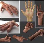 3d-anatomy