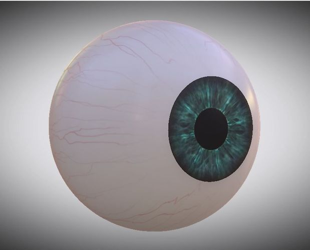 3d-model-eye-ball-3d-model-low-poly-animated-low-poly-anatomy-7