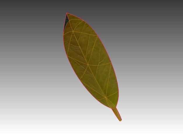 3d-model-indoor-plant-rigged-low-poly-jpg-18
