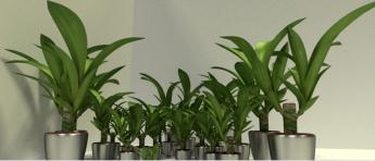 Indoor Pot Plant 2