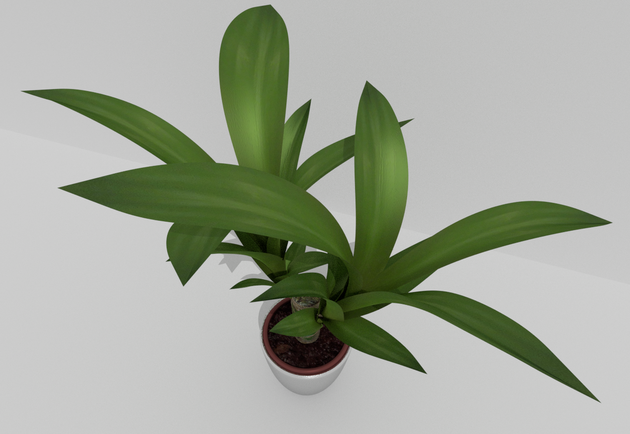 Indoor Pot Plant 2