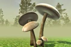3d-models-mushrooms-15