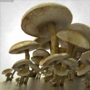 3d-models-mushrooms-4
