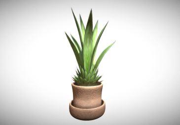 Indoor Pot Plant 3