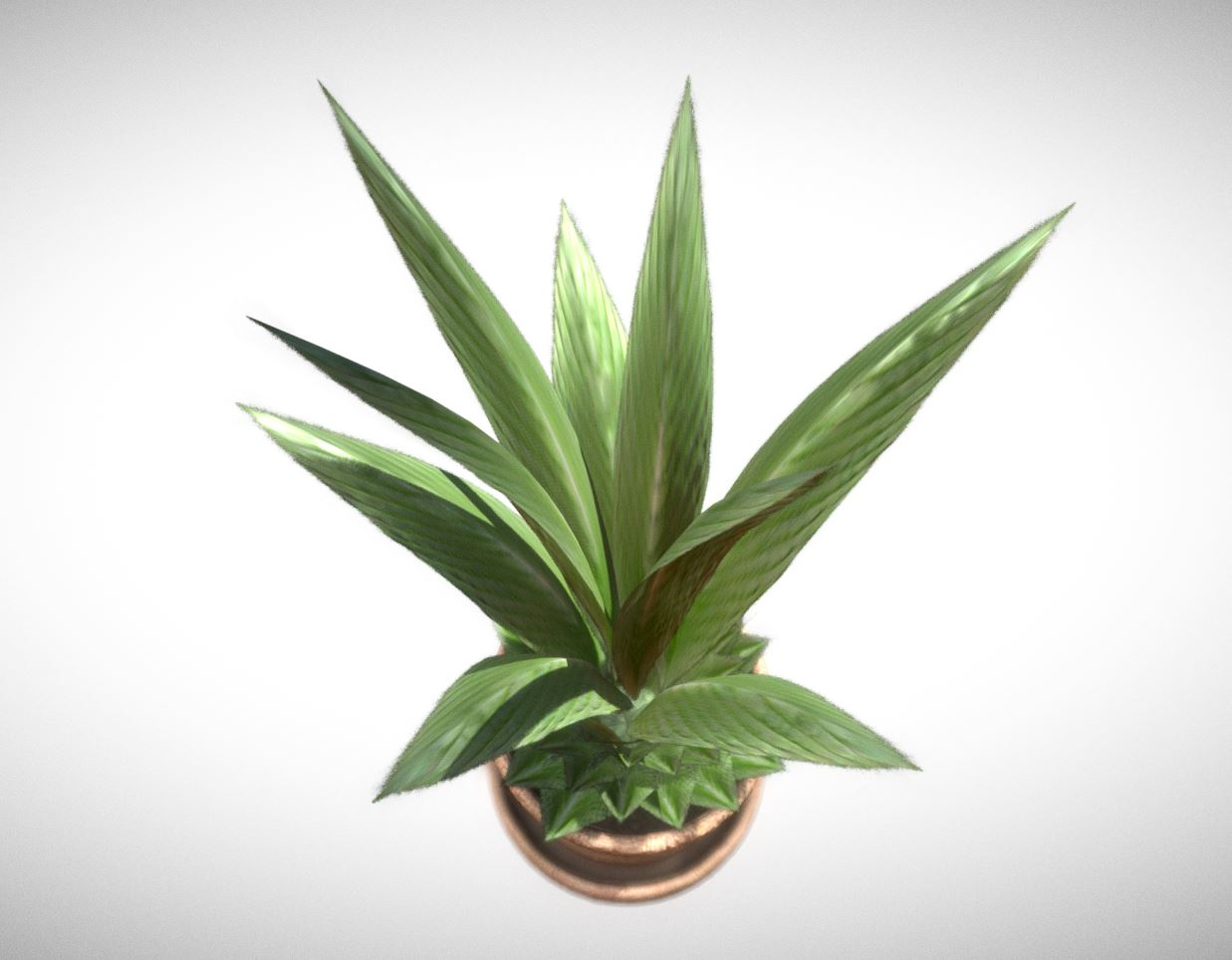 Indoor Pot Plant 1