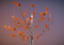Small Pear Trees - Four Seasons (24)