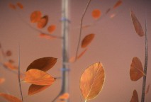 Small Pear Trees - Four Seasons (34)