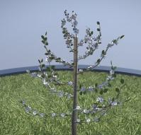 Small Pear Trees - Four Seasons (39)