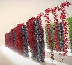 Vines - Climbing Plants (Done) (6)