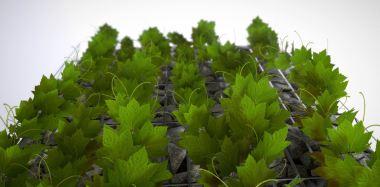 Vines - Climbing Plants (WIP-3) (5)