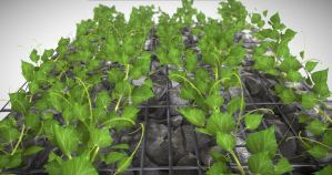 Vines - Climbing Plants (WIP-4) (3)